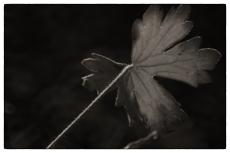 """""""Fall Leaf""""- 12x18"""" $1350"""